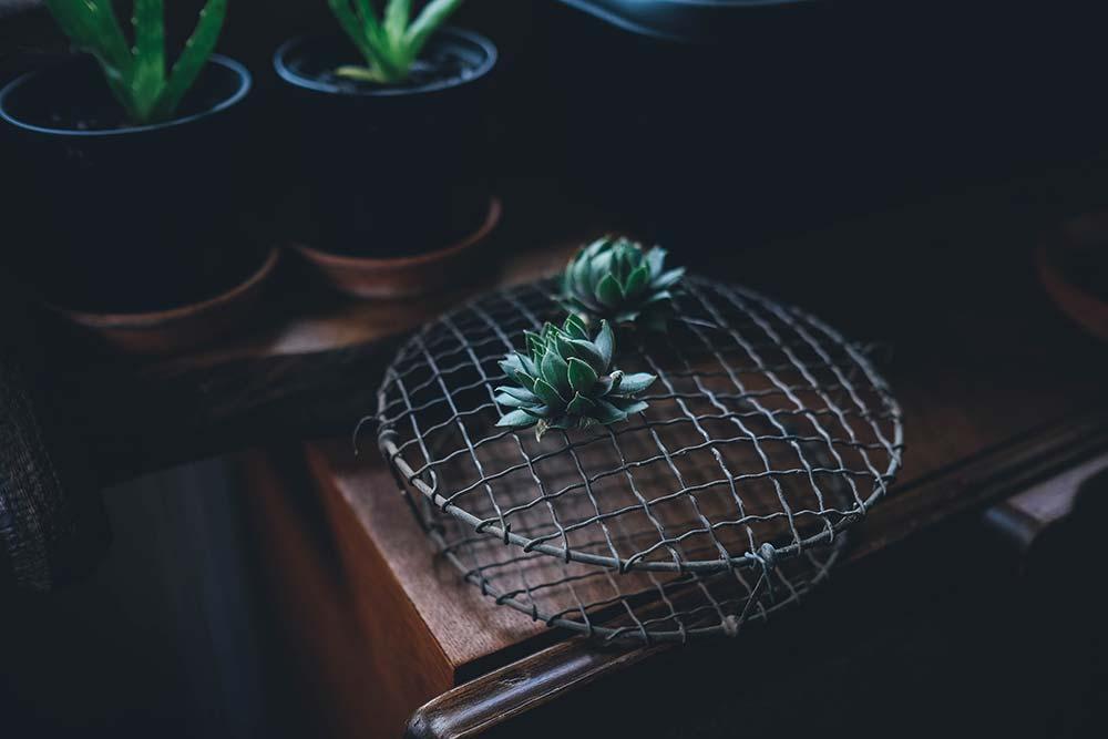 blog-19